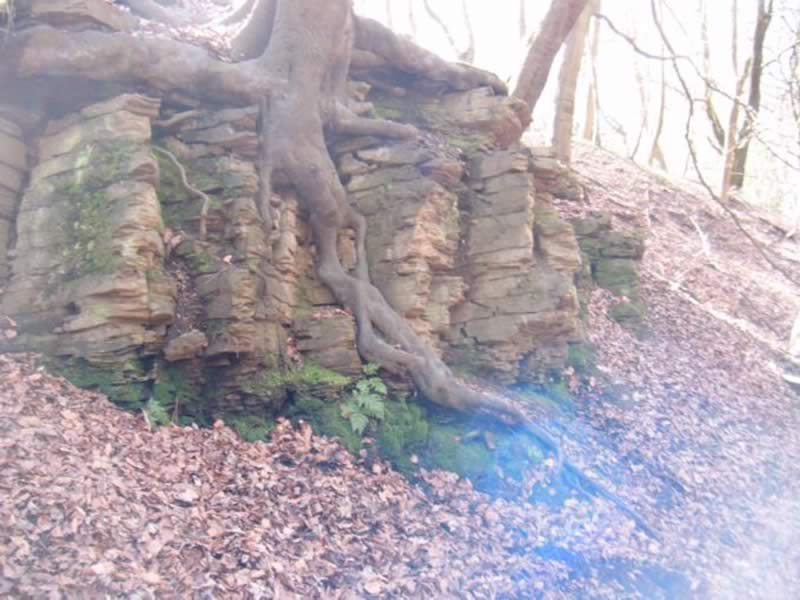 Outcrop in Graves Park