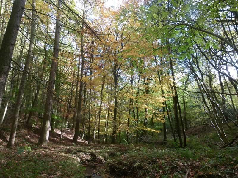 Gillfield Wood in Autumn