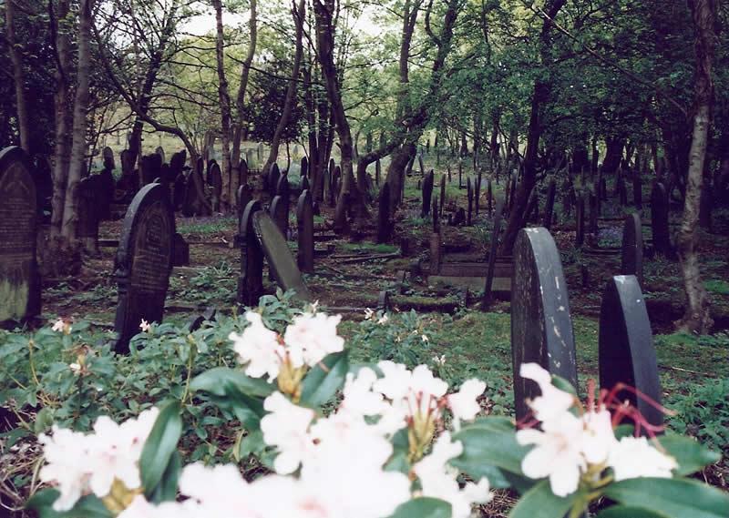 Wardsend Cemetery in springtime
