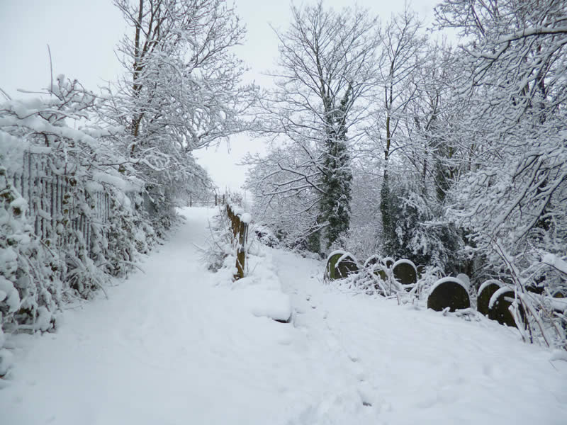 Snow in Wardsend Cemetery. Photo by George Proctor.