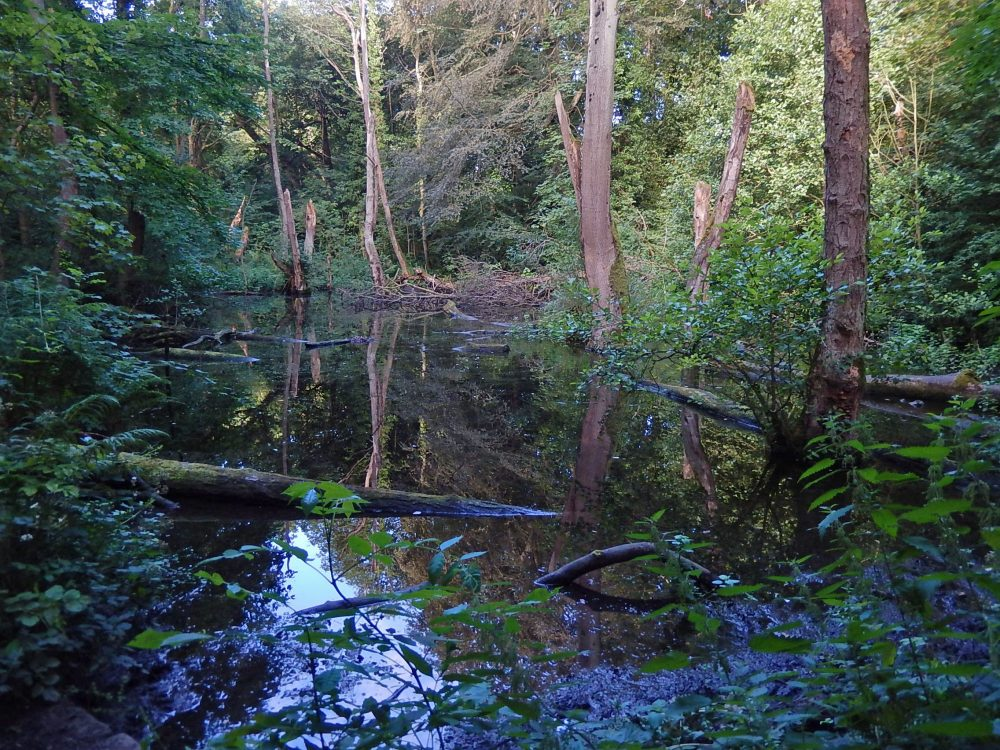 The mill dam at Second Coppice. (RVCG, 2016)